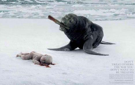 cruelty on animals. Against Animal Cruelty