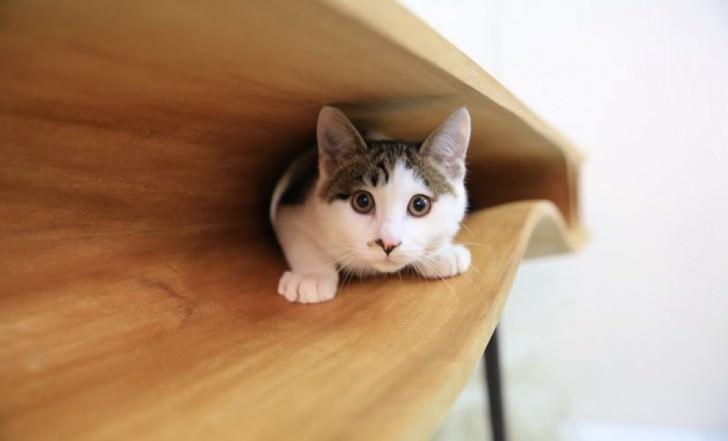 interior design cats