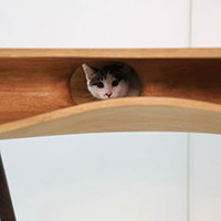 thumbnails-cat-table